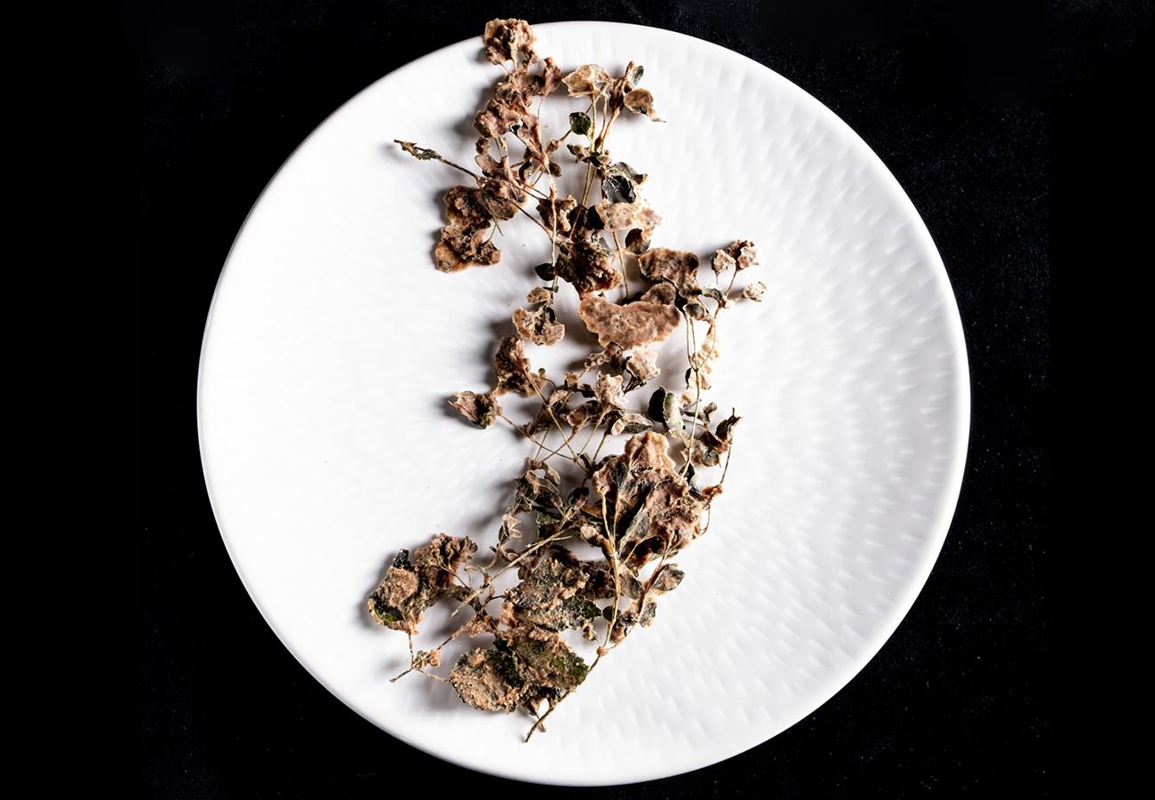 sperimentazioni di fermentazioni di erbe del sottobosco