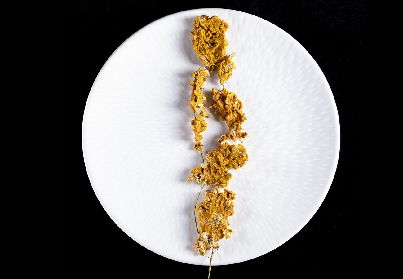erbe spontanee fermentate del bosco aretino