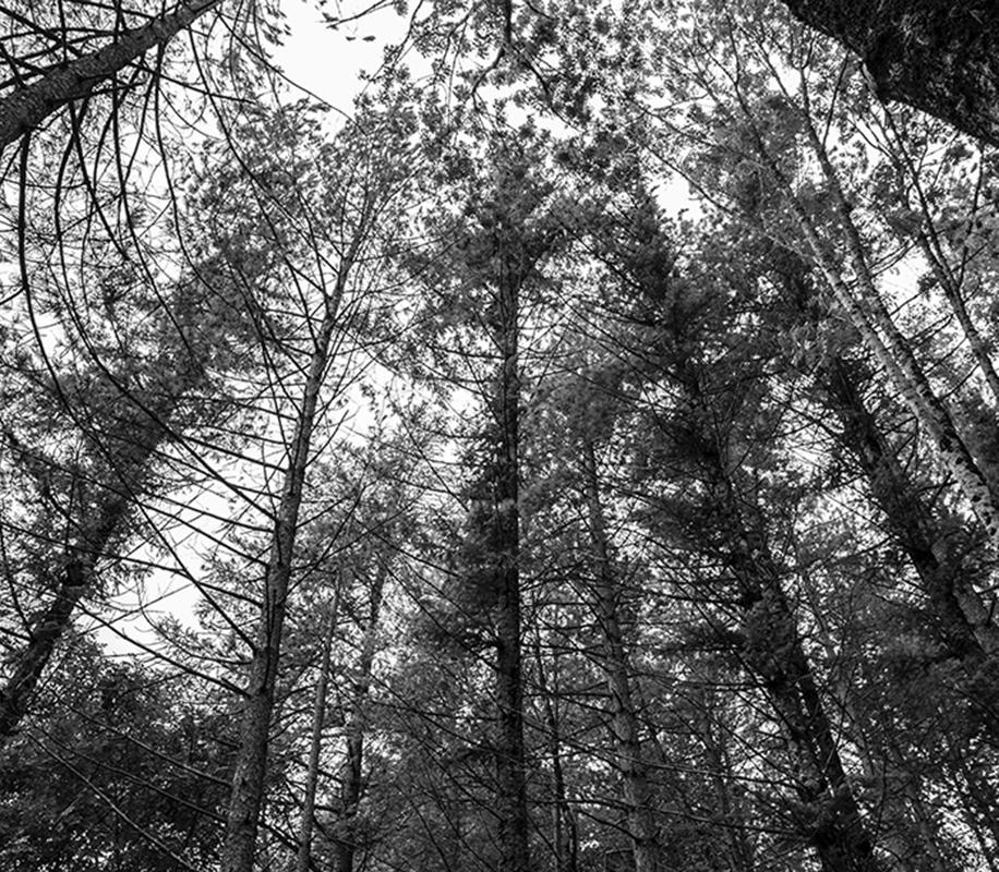 la foresta casentinese