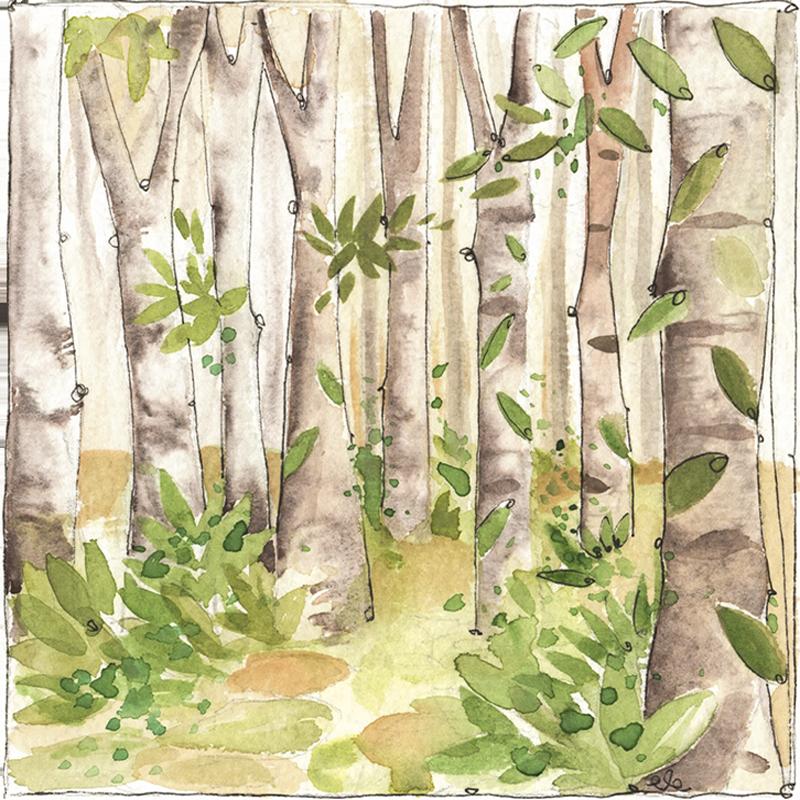 acquerello bosco di Camaldoli