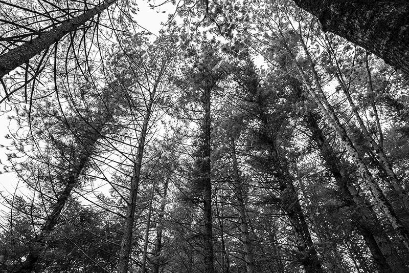 Alberi alto fusto foreste Casentinesi