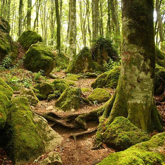Foreste Casentinesi il polmone verde d'Italia